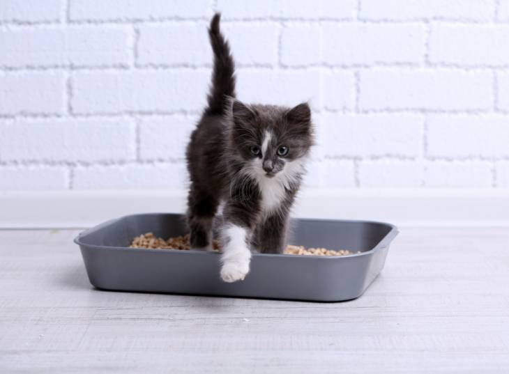 Not properly cleaning your cat's litter box