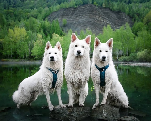 The breathtaking photos of the adventures of Björn, Walkiria and Fenris all over the world, were also shared by Agnieszka