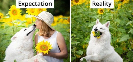 Woman Attempts Photoshoot with Her Dogs with Sunflowers but Everything Goes Hilariously Wrong