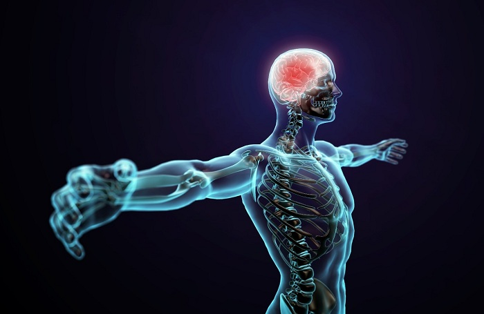 Benefits for your central nervous system functions