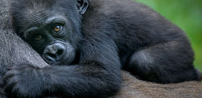 The 10 Most Endangered Species on Earth that Are Nearly Extinct