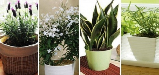 10 House Plants to Keep in Your Bedroom to Improve Your Sleep