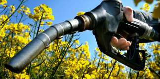 Scientists Discover Biofuels are Worse on the Environment than Petrol