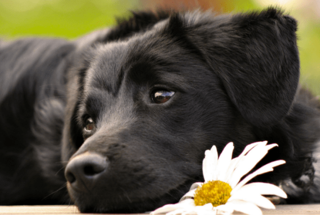 The Pet Aging Project – Help Your Dog Live Longer