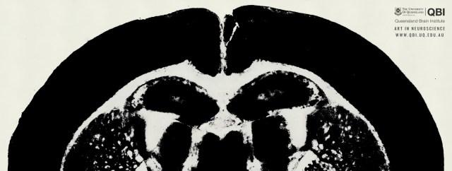 qbi-art-in-neuroscience 1920 × 725