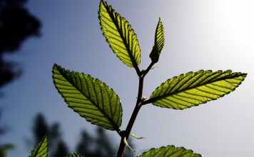 The Way in Which Plants Absorb Carbon Affects How They Respond to Climate Change