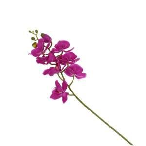 Konstväxt Orkidé Lila