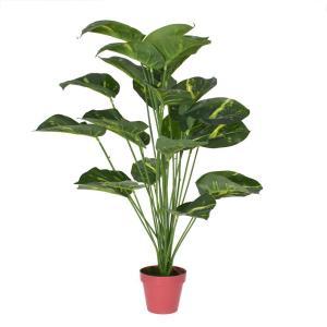 Konstväxt Växt Grön