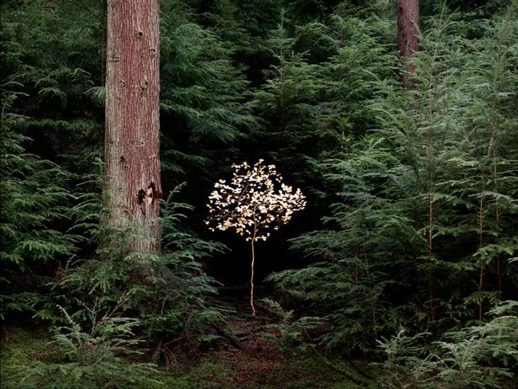 ellie-davies-art-forest-2