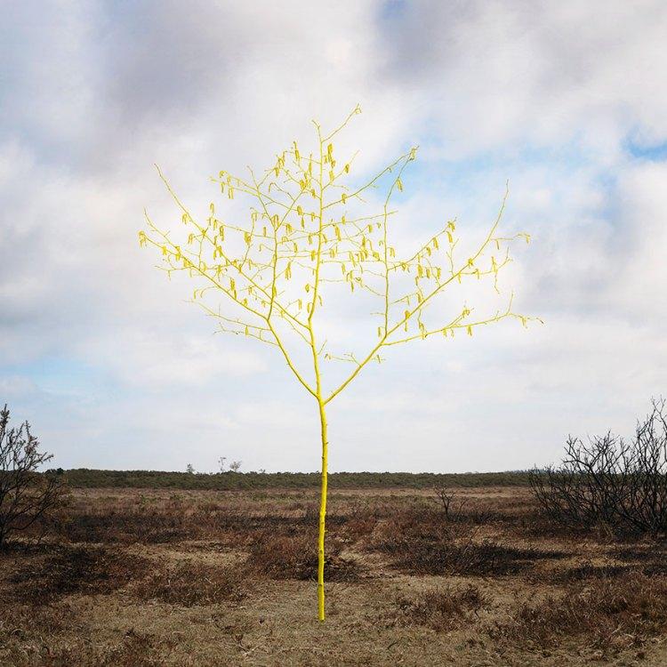 ellie-davies-art-forest-5
