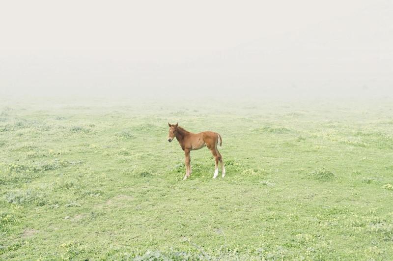 Petros-Koublis-Ephemeral-Landscapes-02