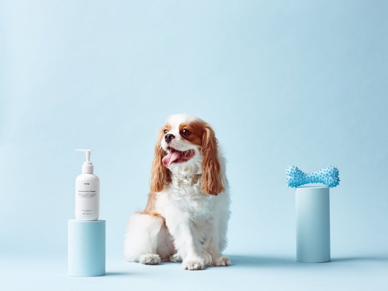 mr-paw-is-a-dog-grooming-brand-with-unique-identity-5