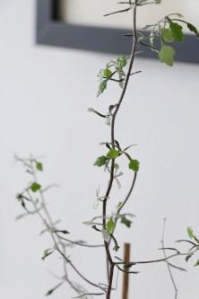 Tiny leafs