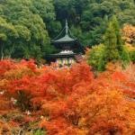 京都の冬 ぶらり1日で巡れる銀閣寺~南禅寺