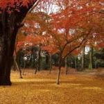 京都のパワースポット 史跡 糺の森の紅葉