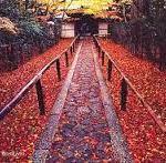 楓の庭を眺めながらお抹茶でひと時を高桐院