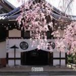 三十三間堂~東福寺(観光コースに迷った時 )