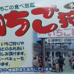春が旬の「いちご狩り」京都の川西観光苺園