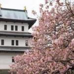 二条城ライトアップ 早春の香り~晩春の彩り