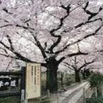 哲学の道~銀閣寺の趣ある歴史