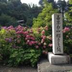 京都 藤森神社の紫陽花祭