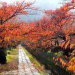 京都で1番人気の散歩道 哲学の道と銀閣寺