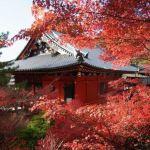 閑やかな紅葉なら古刹・毘沙門堂が穴場