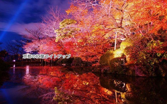 京都の夜間ライトアップおすすめベスト3