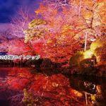 京都の紅葉狩りライトアップおすすめランキング