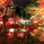 京都 紅葉狩りライットアップ 定番の東山エリア