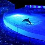 京都水族館  イルカのナイトライブが美し過ぎる