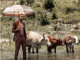 Zulu Mkhathini Spirit Of Ubuntu Album Download
