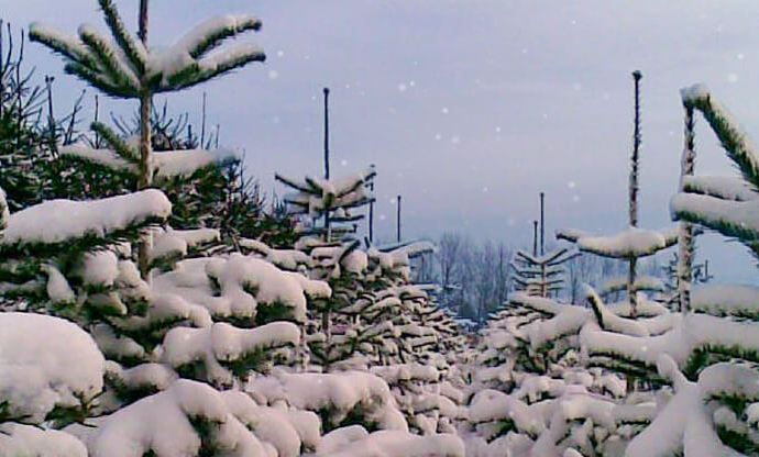 Ny webshop bringer det traditionelle køb af juletræer til døren
