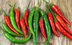 Chili Salsino Trendsonline