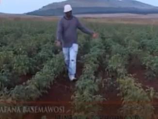 VIDEO: Abafana Basemawosi - Izintaba Zokhahlamba mp3 download