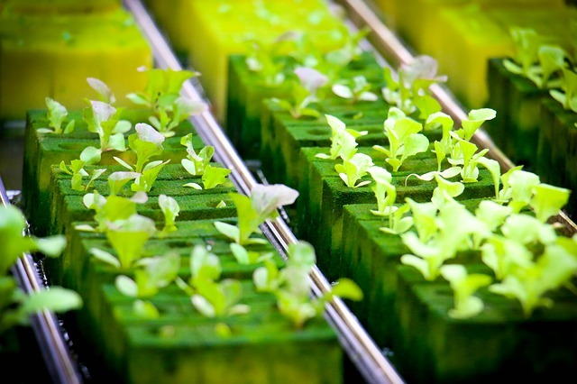 The Ultimate Hydroponic Farming Guide in 2021