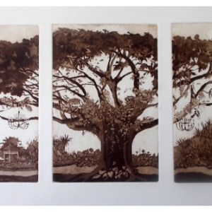 Halsby, Miranda RBA (1948 – ) The Saman Tree