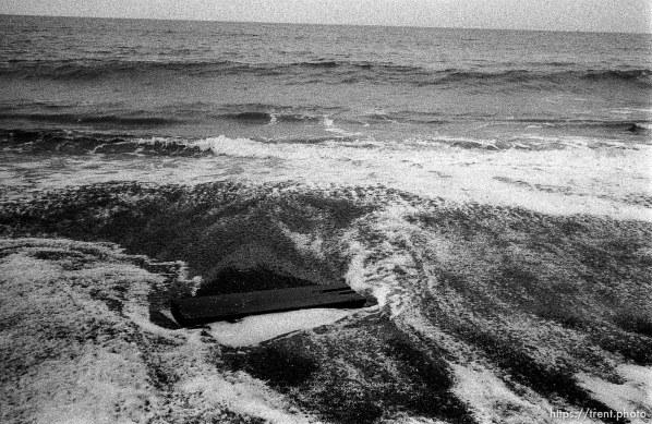 log in waves at beach.