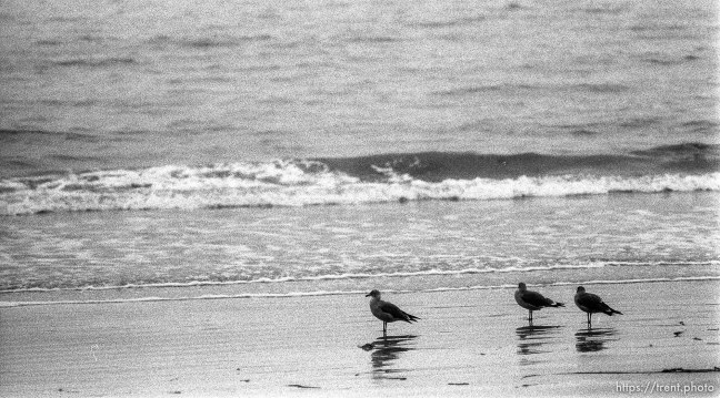 birds and surf at the beach.