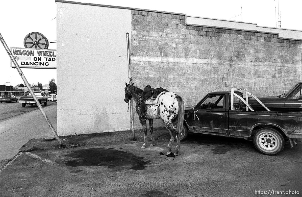 Horse tied up in the parking lot of the Wagon Wheel.