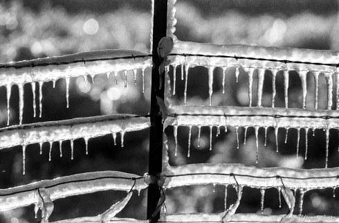 Sprinklers making ice on fence.