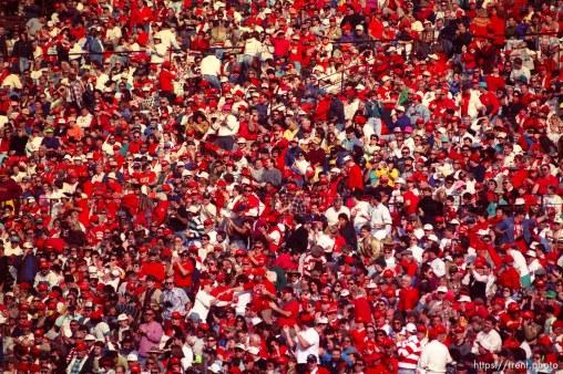 Fans at the 49ers vs Saints.