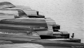 Boats and duck at the Lafayette Reservoir