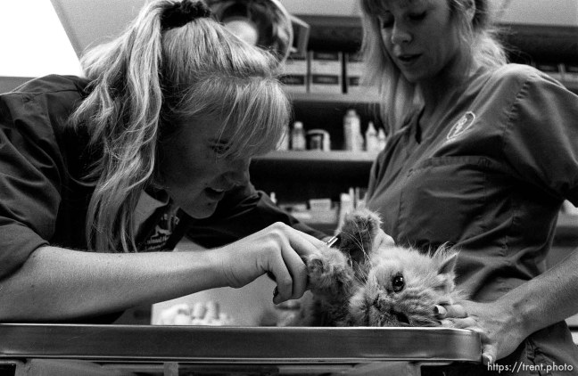 Cat gets checked out at the Lafayette Animal Hospital