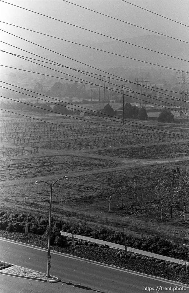 Power lines and orchard. View of homes from hill. San Ramon project