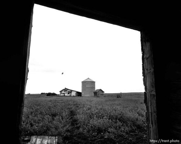 Bird flies past home and silo, seen through barn door at Aunt Bea's farm.