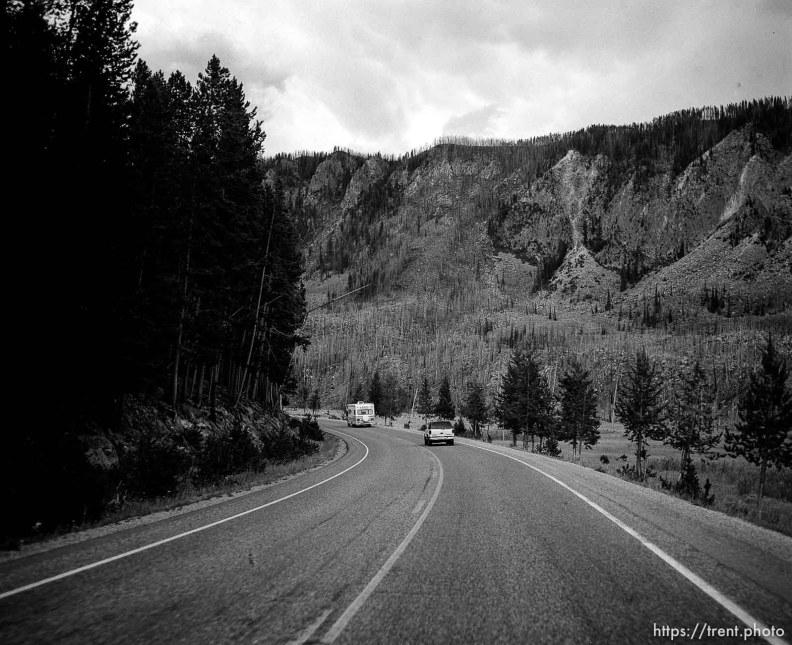 Cars driving through Yellowstone.