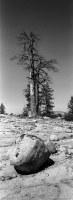 Rock and tree at Sword Lake