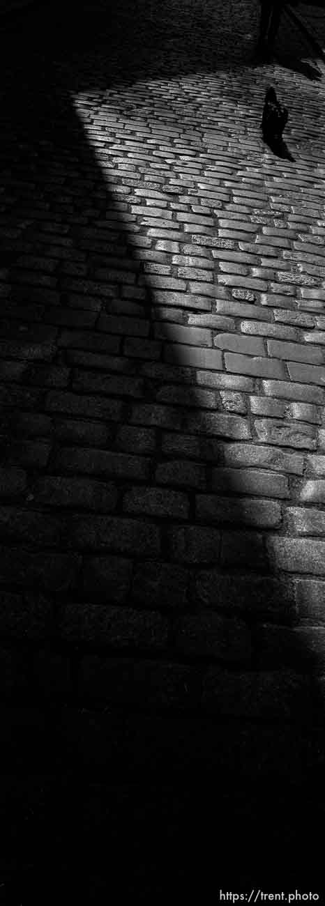 Dog walking on cobblestones