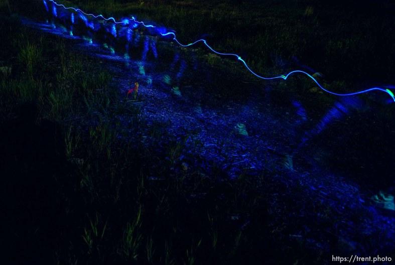 A runner's flashlight illuminates the trial in the night near Brighton. Wasatch 100 Endurance Run.